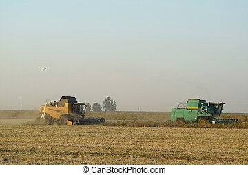 Soy harvesting by combines in the field. Agricultural...