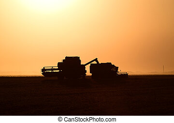 Harvesting by combines at sunset Agricultural machinery in...
