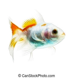 Goldfish Fractals Isolated On White - Fractal Design Of A...