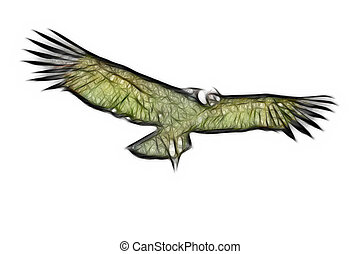 andino, condor, isolato,