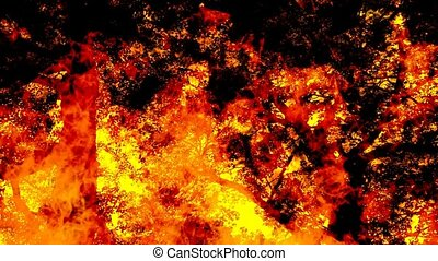 Forrest Fire Looping Background - Looping Forest Fire...