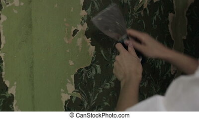 Woman stripping old wallpaper Woman hands with with spatula...