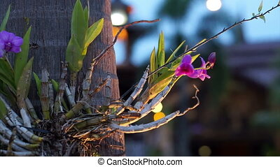 orchid on the tree light up night - orchid on the tree light...