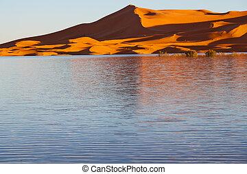 sunshine in the lake yellow  desert of