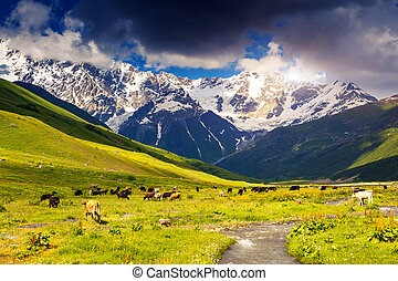 alp - Alpine meadows at the foot of Mt Shkhara Upper...