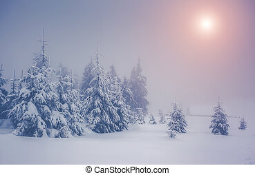 Amazing winter landscape - Majestic winter landscape glowing...