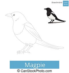 Magpie bird learn to draw vector - Magpie learn birds...