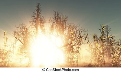 fog glowing sun and dead trees