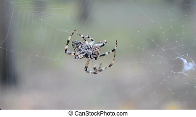 spider on the web, environment - spider on the web, seasonal...