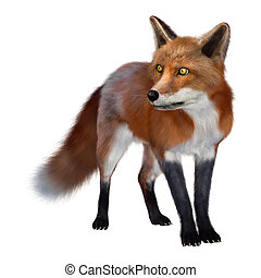Red Fox - 3D digital render of a red fox isolated on white...