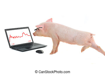 pig works on the computer