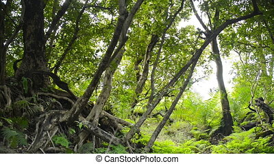 African Jungle - Lush green African jungle growth in...