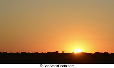 African Sunset - Classic African sunset over the silhouetted...
