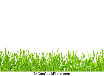 lawn - Green lawn isolated on white background