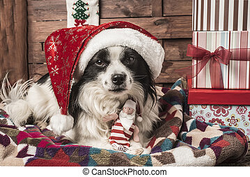 Christmas dogs - Christmas postalcards, dog with hat and...