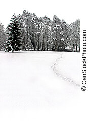 Winter scene of woodland trees covered in snow - Cold winter...