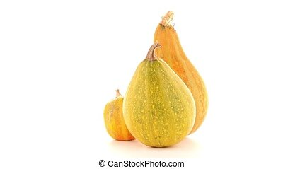 Pumpkins isolated on white background