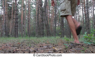 Man goes on coniferous forest with backpack - Coniferous...
