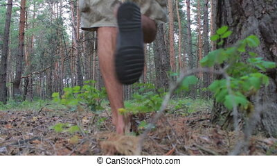 Man goes on coniferous forest with backpack. - Coniferous...