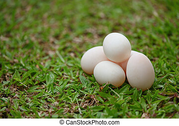eggs on grass, Fresh eggs for cooking or raw material, fresh...