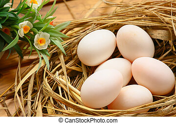 eggs in nest on the nature, Fresh eggs for cooking or raw...