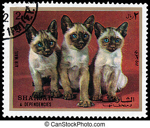 Stamps printed in Sharjah shows Siamese kittens