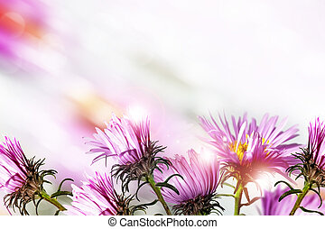 Autumn flowers asters. Landscape.