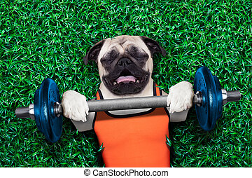 personal trainer dog