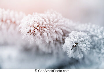 fir branch in hoar frost on cold morning, toned photo