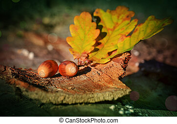 Branch with leaves and acorns lying on a tree bark.