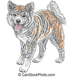 vector sketch dog Akita Inu Japanese breed smiles - Akita...