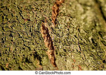 cortex tree for natural background