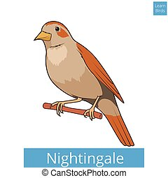 Nightingale learn birds educational game vector illustration