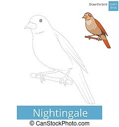 Nightingale bird learn to draw vector - Nightingale learn...