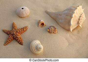 Caribbean beach sand with sea shells and starfish, texture