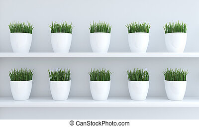 Green grass in flowerpots on the shelf in line