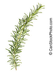 Rosemary Sprig Isolated on white - Rosemary sprig isolated...