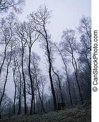 Winter in the wet cold spooky woods