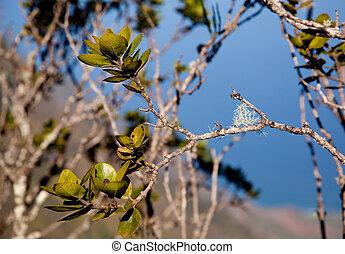 Leaves frame Na Pali Coast