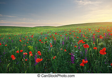 Spring meadow of poppies flowers Composition of nature