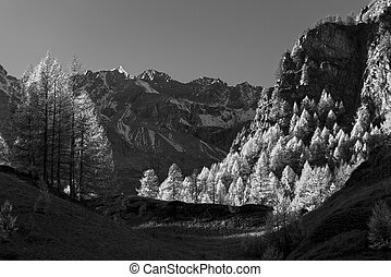 mountain landscape with larches version infrared rays,...