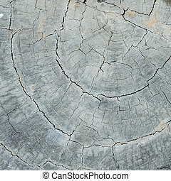 annual ring wood crack damage texture background