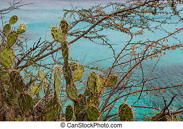 Cactus with Ocean in Background
