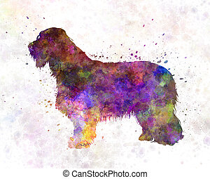 Bearded Collie in watercolor