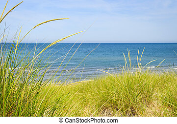Sand dunes at beach - Grass on sand dunes at beach Pinery...