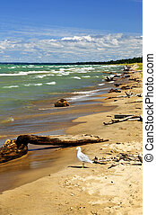Beach with driftwood - Driftwood on sandy beach with waves...
