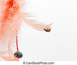 ladybug attacked orange feather - small ladybug attacked...