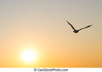 The flying bird in the sky at sunset