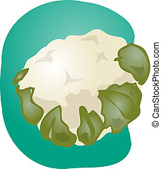 Cauliflower illustration - Sketch of a cauliflower...
