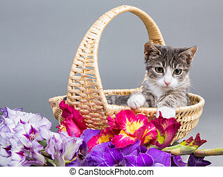 cute kitten in basket with flowers - grey tiger kitten...